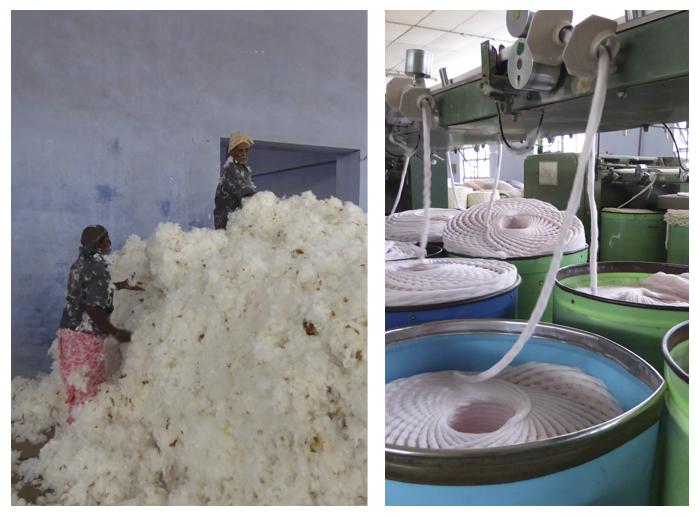 15.06.01 cotton