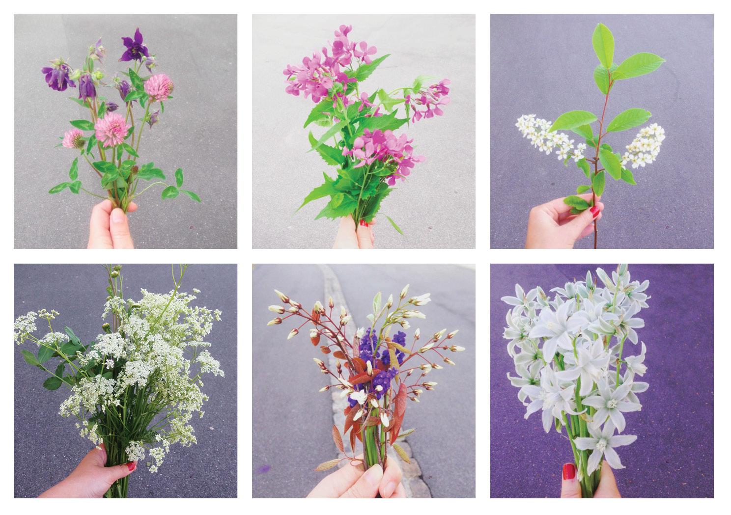 mine vilde blomster i maj