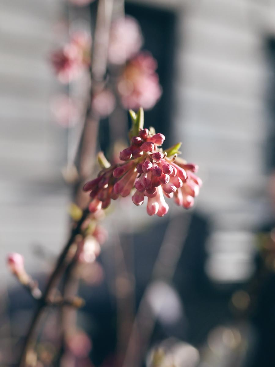 vilde blomster 1