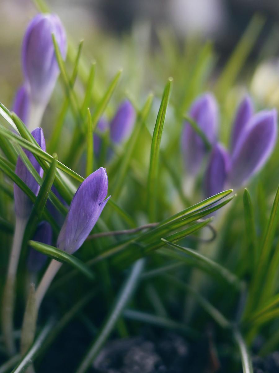 vilde blomster 2