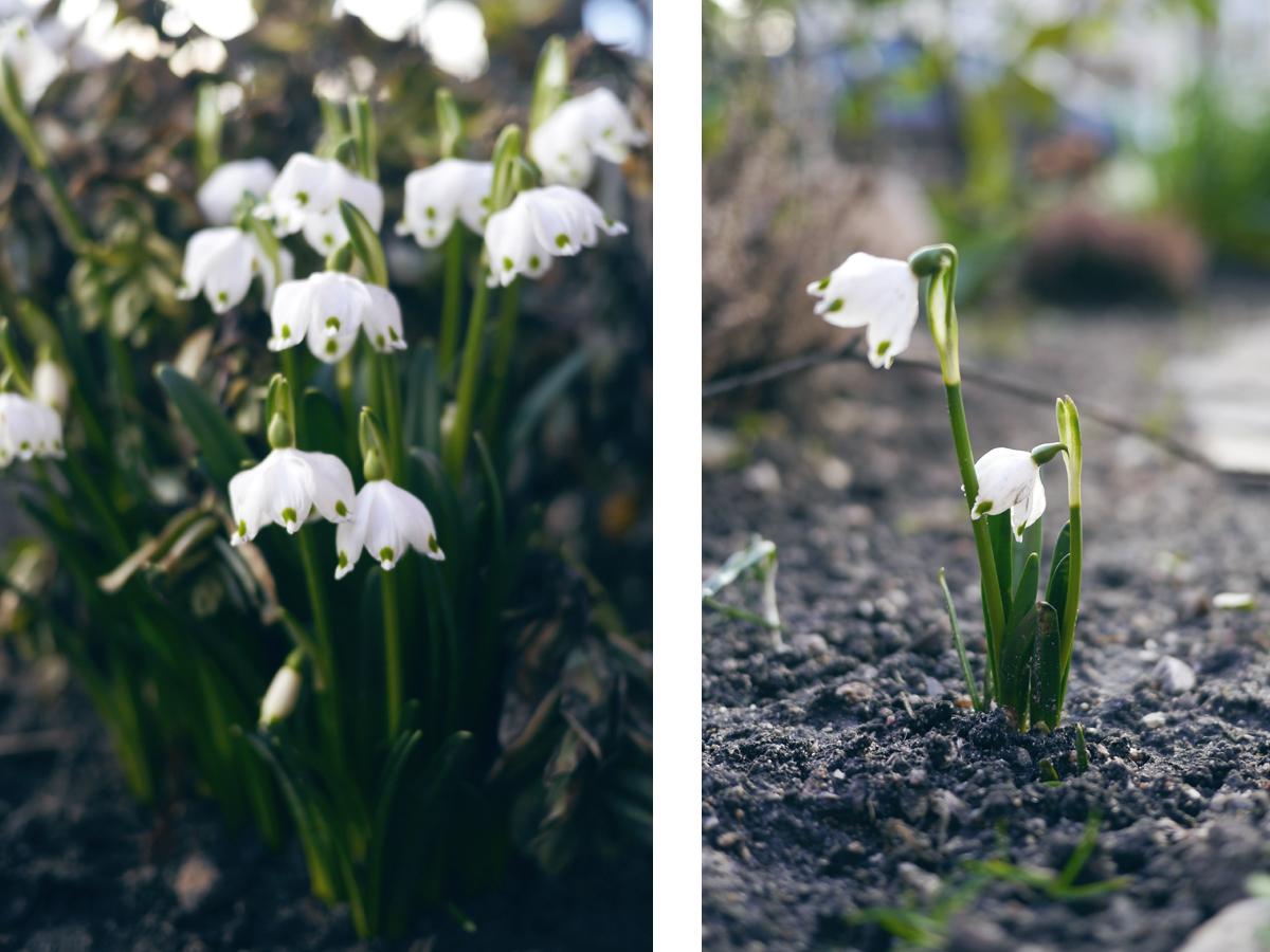 vilde blomster 3